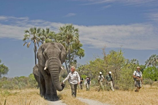 Walking with Elephants